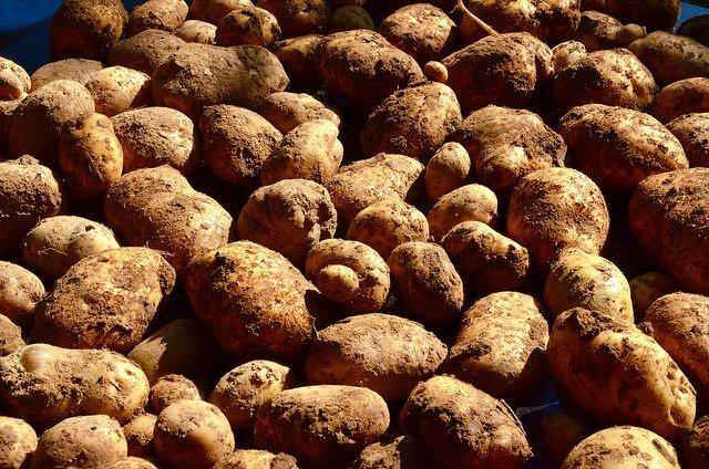 Patatas bintje. Cómo hacer unas buenas patatas fritas