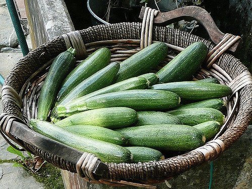 Calabacines (flickr.com)