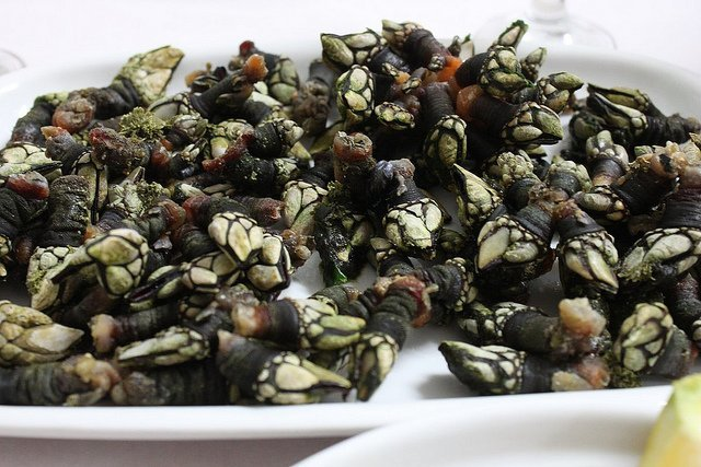 Percebes (flickr.com)