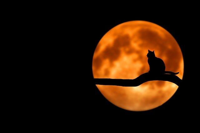 Halloween gato negro