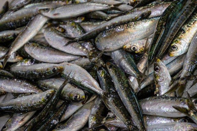 Recetas con sardinas