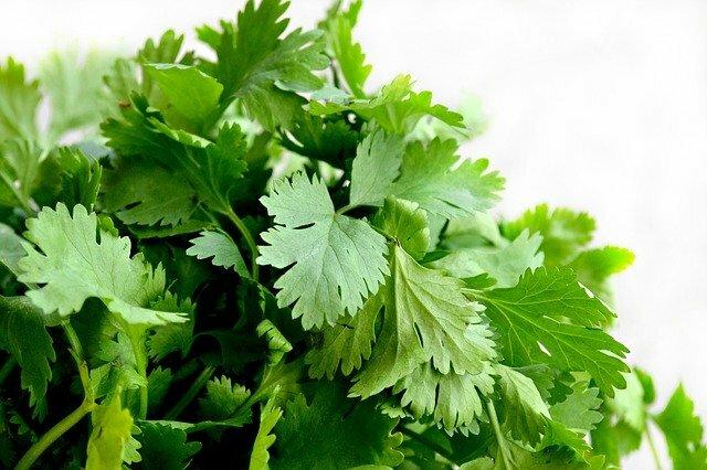 Falafel de lentejas (perejil y cilantro)
