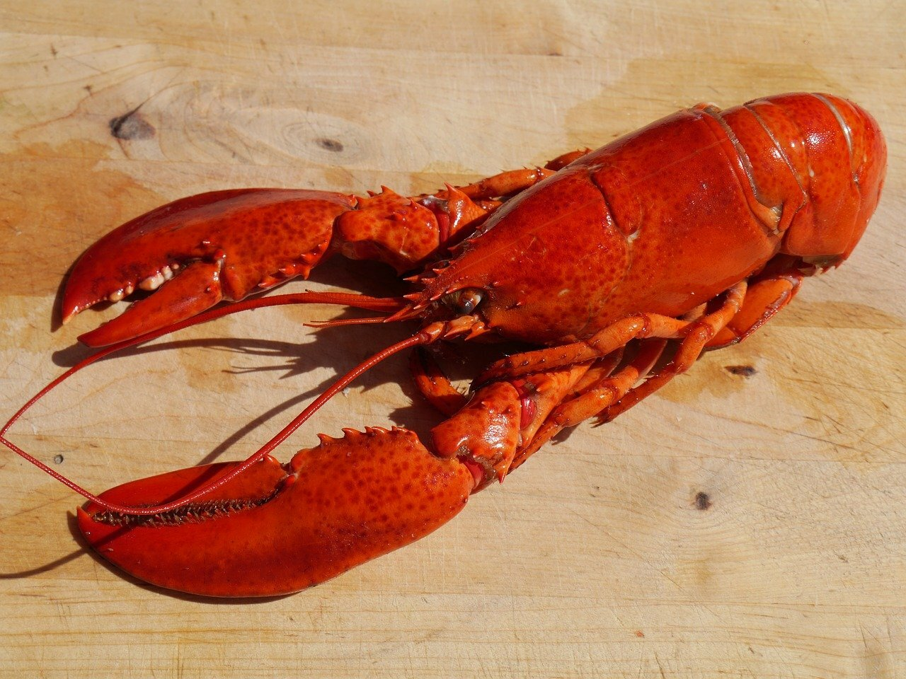 Ingredientes lobster roll o sándwich de bogavante